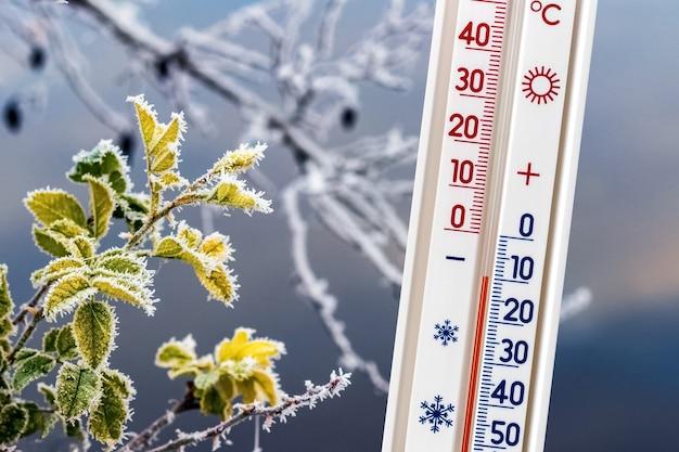 霜に覆われた木の枝の背景にある温度計は、マイナス10度の温度を示しています