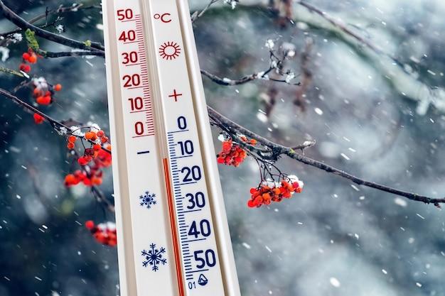 赤い果実のあるナナカマドの枝の背景にある温度計は、マイナス10度の温度を示しています