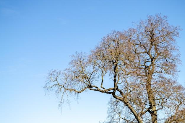 晴れた日の青空と柳の木のてっぺん