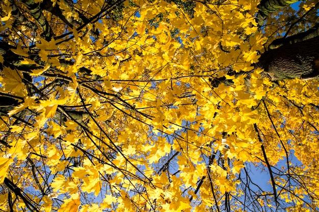 Верхушки и кроны деревьев - желтая листва