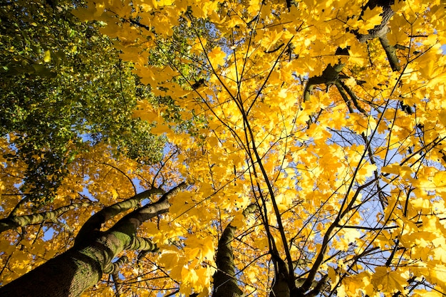 Верхушки и кроны деревьев