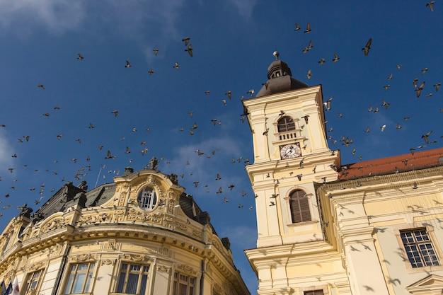 シビウ、トランシルバニア、ルーマニアの市庁舎