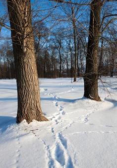 Следы последнего человека, оставленного на снегу. зимний сезон