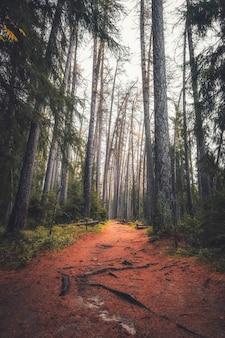 晩秋のカラマツの木が生い茂るリンドゥロフスカヤの小道