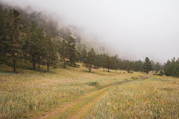 Тропа у горы в густом тумане через ели