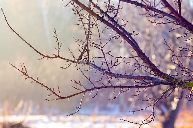 冬の木の枝は明るい晴れた日に太陽に逆らっています_