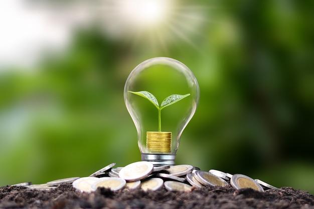 Дерево растет золотыми монетами в энергосберегающих лампах. концепции энергосбережения и возобновляемых источников энергии