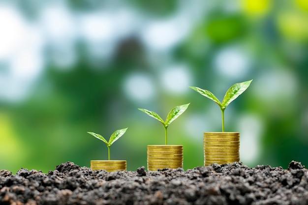 Дерево растет за счет денег, а плодородная почва - это идея роста бизнеса, финансов, инвестиций.