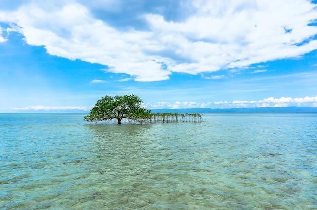 周りに人がいない海の真ん中にある澄んだ水の中にある木。美しい背景画像