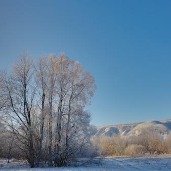 겨울의 나무는 구름없는 하늘을 배경으로 맑은 날에 흰 서리로 덮여 있습니다.