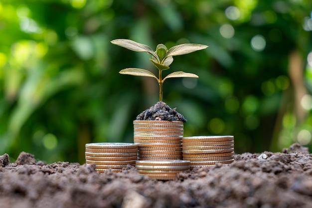 나무는 자연 배경, 흐릿한 녹색, 돈 절약 아이디어 및 경제 성장을 가진 동전 더미에서 자라고 있습니다.