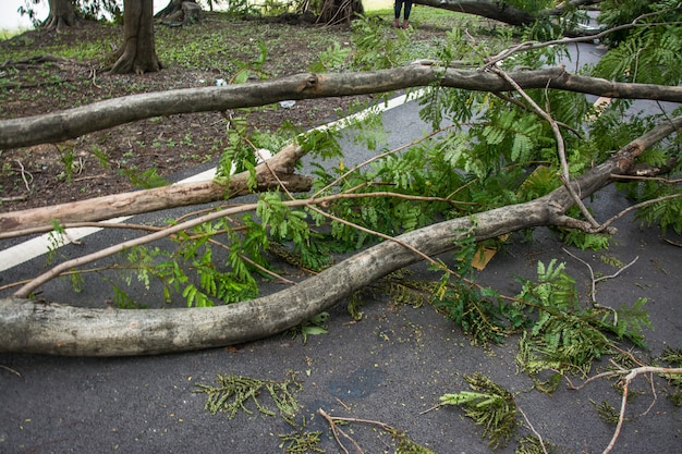 Дерево было разрушено силой шторма Premium Фотографии