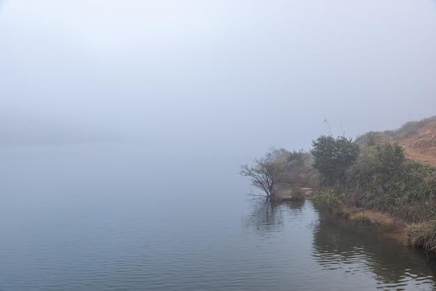 호수 옆의 나무와 초원은 안개에 흐릿했습니다.