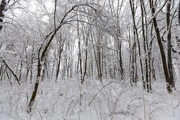 Деревья засыпаны снегом после заморозков и снегопадов, большое количество голых лиственных деревьев в зимнее время года, сугробы в парке или зимнем лесу, на снегу останутся следы.