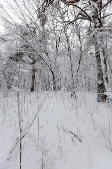 Деревья засыпаны снегом