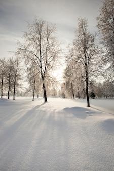 冬の公園で育つ木々は太陽が木の後ろの雲の後ろにあります