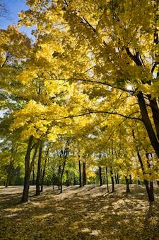 秋のカエデの森に生える木々