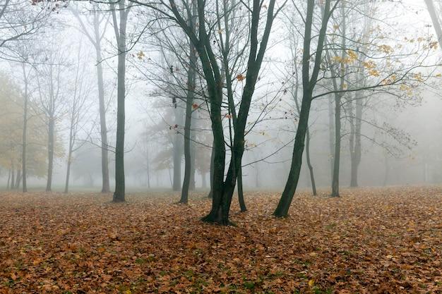 작은 안개 속에서 가을 시즌에 공원에서 자라는 나무들