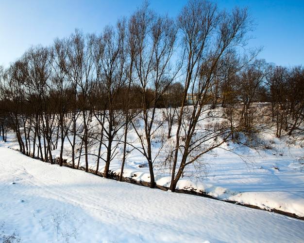 겨울철 나무에서 자라는 나무들