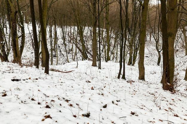 冬の間に撮影された木々。降雪後の雪に覆われた地面。