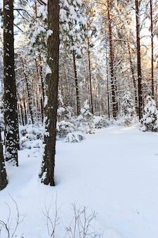 겨울철에 촬영 된 나무들.