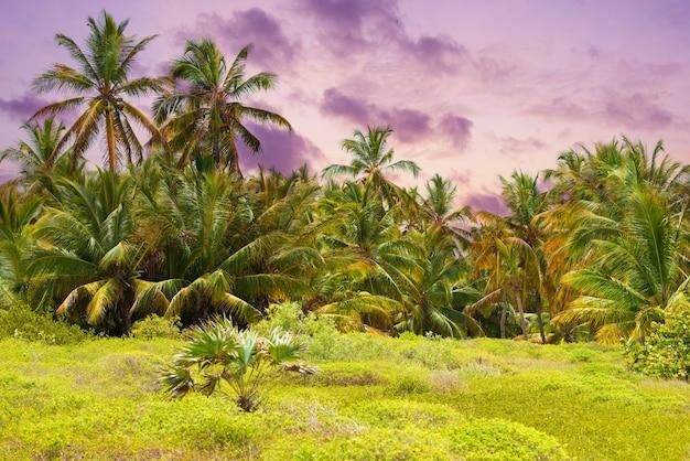 Тропический лес, пальмы на пляже фоне пальм.