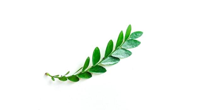 격리 된 흰색 배경에 열 대 잎 열 대 식물