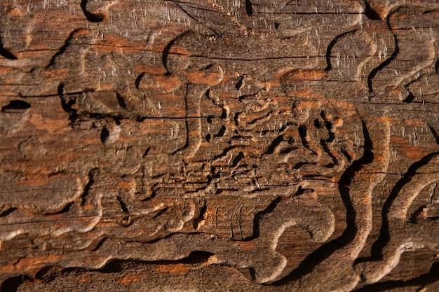 Ствол сосны, съеденной жуком-короедом крупным планом