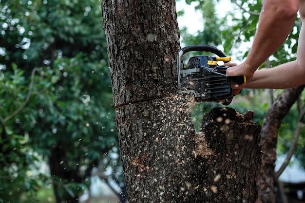 Ствол дерева распиливают большой пилой.