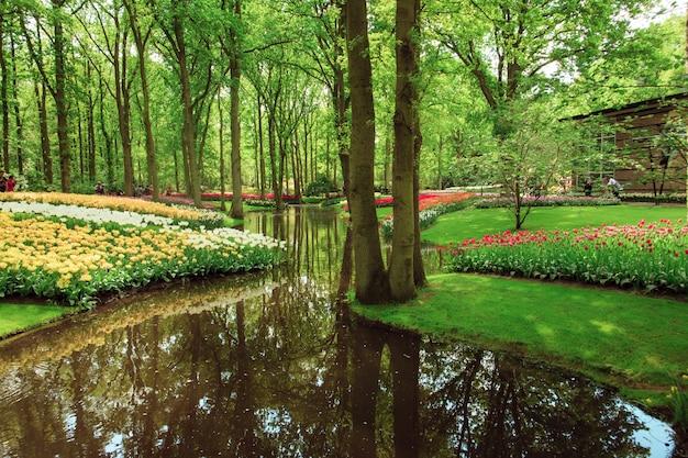 Поле тюльпанов в нидерландах или голландии