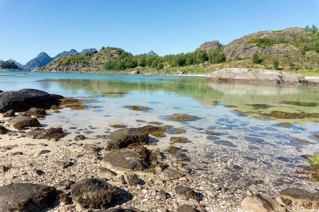 ターコイズブルーの湾の水、夏の石と緑の草、アルシュタイネン島、ロフォーテン諸島、ノルウェー