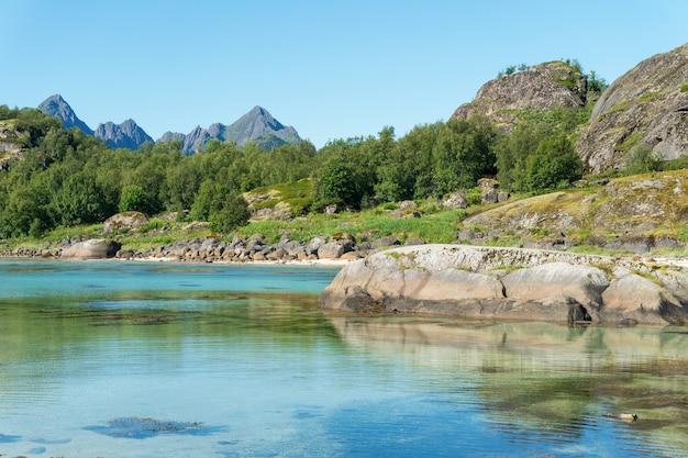 湾のターコイズブルーの水、夏の石と緑の草、ロフォーテン諸島、ノルウェー