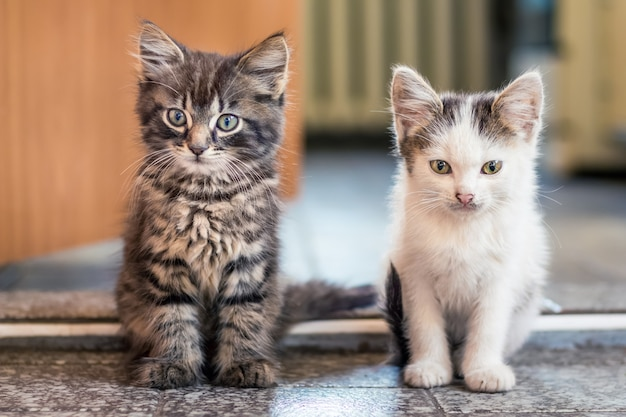 Два котенка сидят на полу в комнате. белые пятнистые и серые полосатые котята - один за другим. котята друзья