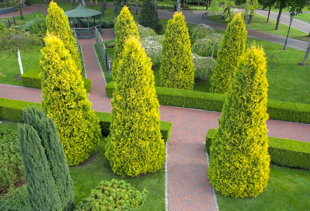 Использование вечнозеленых растений в ландшафтном дизайне. туя, самшит и декоративные растения у аллеи в парке.