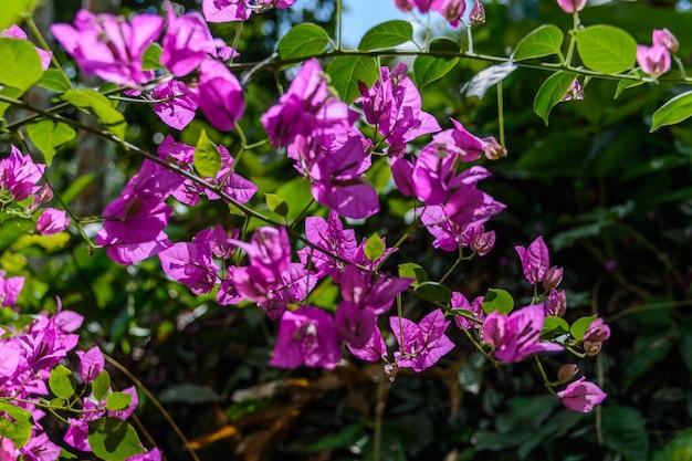 싼야시 야노다 공원의 열대 우림에 있는 다양한 식물, 꽃, 나무. 중국 하이난 섬.