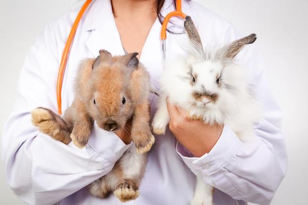 수의사는 매월 검진을 위해 작은 갈색과 흰색 토끼를 가지고 갔다. 애완 동물의 개념, 인간에 대한 세균 예방