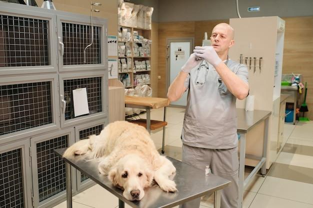 Ветеринар готовит шприц для собаки, чтобы сделать болеутоляющее перед операцией