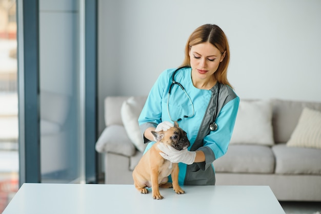Ветеринар слушает собаку с помощью стетоскопа.