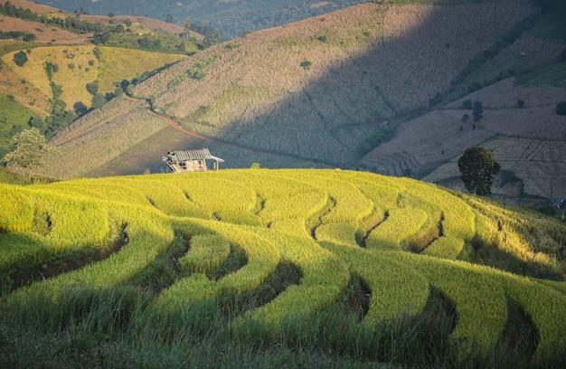 棚田の眺めは、チェンマイのメーチェムにあるタイ北部の心のようです。