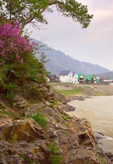 松の木に囲まれたアルタイ山脈の松の家にあるマンジェロクの村