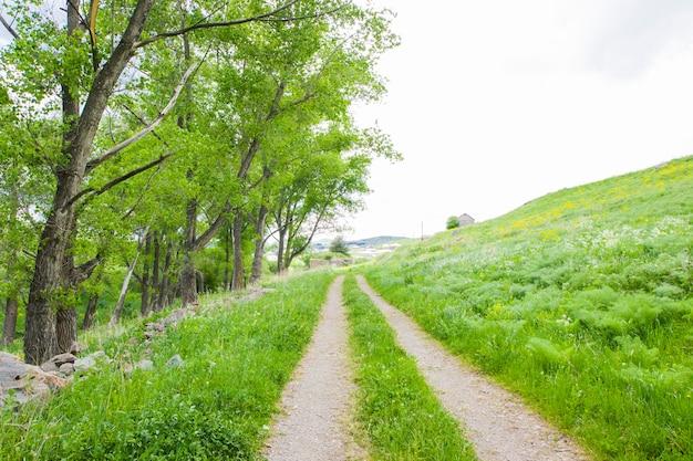 村の道、夏の時間、旅行の背景。ジョージア。