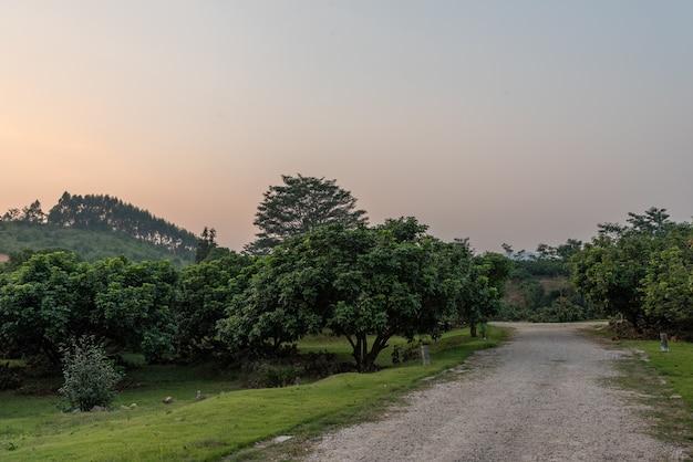 Прогулочная дорожка в парке окружена деревьями.