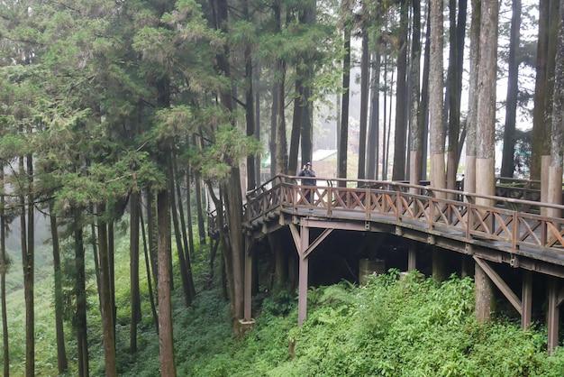 Дорожка из дерева в лесу алишан в национальном парке алишан, тайвань. оранжевый светлый тон