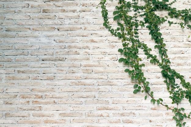 Стена сделана из кирпича, а затем окрашена в белый цвет. на левой стене есть лианы.
