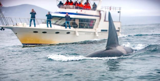 クジラと観光客のいるボート