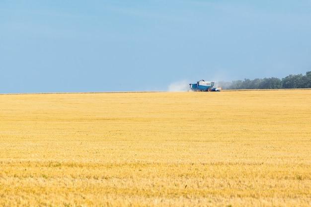 晴れた夏の日の麦畑