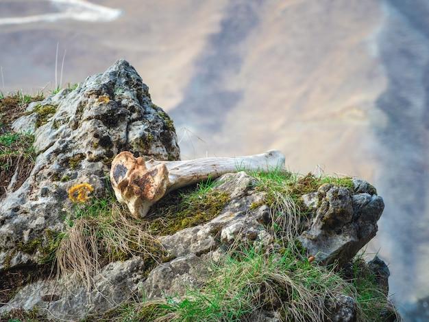 Белая кость животного лежит на скале на обрыве горы. закройте вверх.