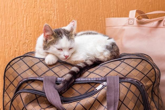 흰 고양이는 가방에 있습니다. 기차역에서 기차를 기다리고 있습니다. 여행 중 가방을 소지 한 승객 _