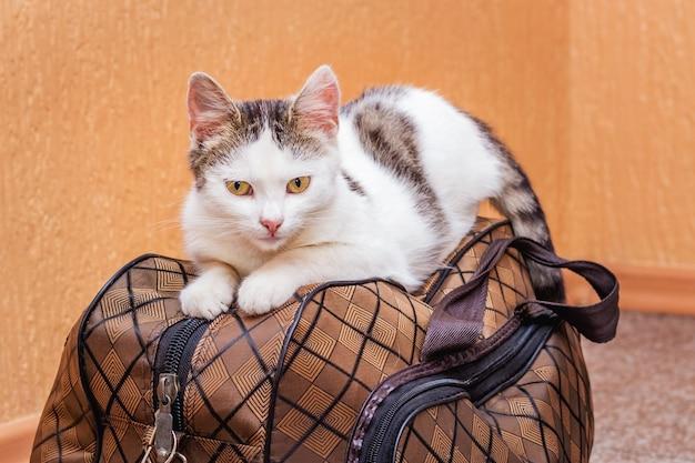 흰 고양이는 가방에 있습니다. 기차역에서 기차를 기다리고 있습니다. 여행 중 가방을 소지 한 승객
