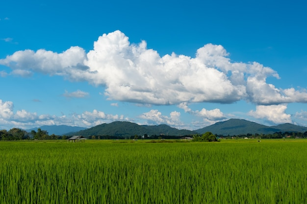 Белые облака имеют странную форму и гору. небо и открытое пространство имеют внизу горы. облака плывут над горами.
